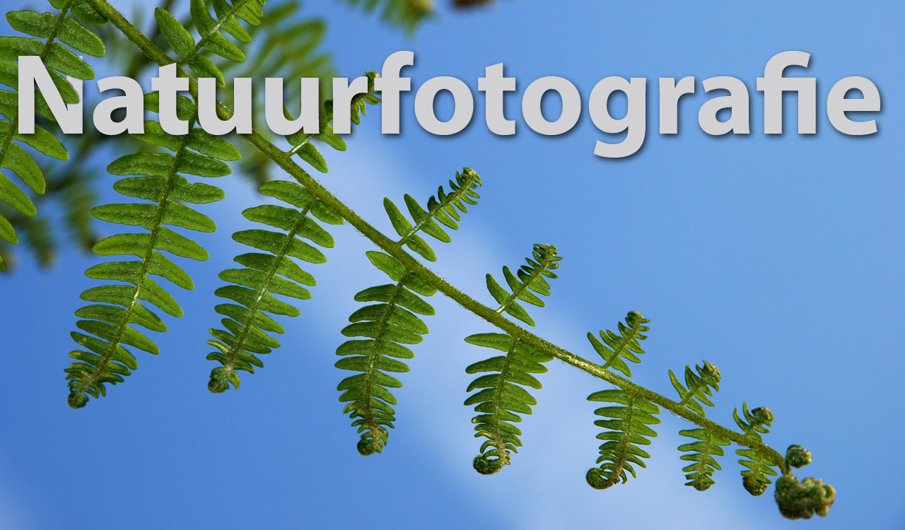Natuurfoto Workshop Posbank